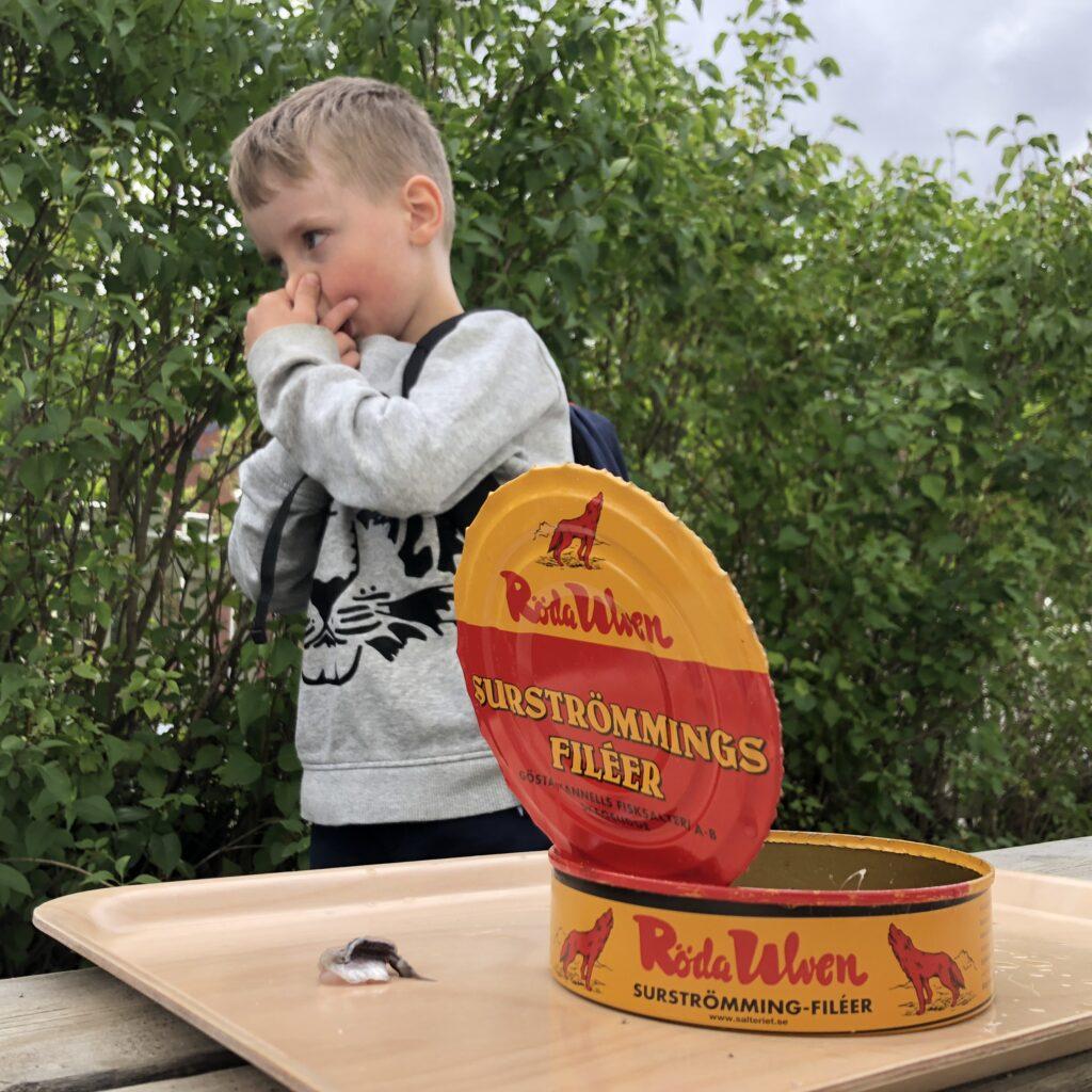 Ett barn håller för näsan framför en surströmmingsburk
